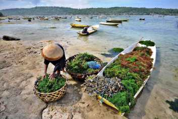 algues-nusa-lembongan-bali-culture-travailleur-mer