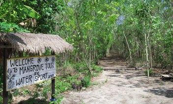 g-mangrove